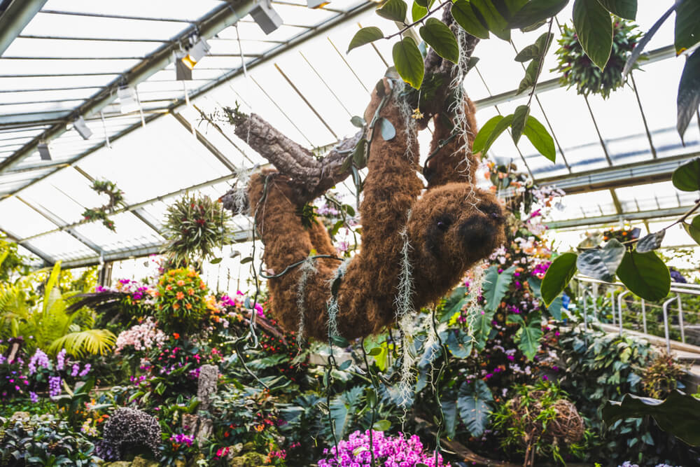 Orchids festival at Kew Gardens, London